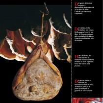 Prosciutto Di Greve In Chianti- Macelleria Falorni